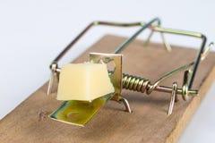 Ratonera en una tabla blanca Trampa con queso amarillo como cebo fotos de archivo