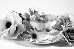 Ratones de la flor en taza de té Fotografía de archivo