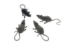 Ratos do brinquedo Imagem de Stock