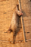 Ratos inoperantes no mercado rural Imagens de Stock