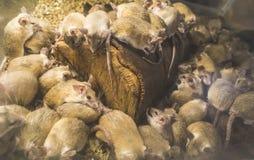 Ratos na madeira foto de stock royalty free