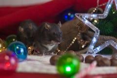 Ratos pretos do ano novo Decorações da árvore de Natal e a imagem de stock