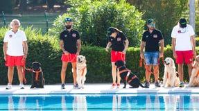 Ratownicza demonstracja z ratowników psami Fotografia Royalty Free