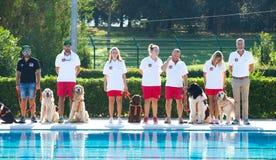 Ratownicza demonstracja z ratowników psami Zdjęcie Royalty Free