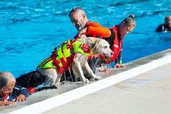 Ratownicza demonstracja z ratowników psami Zdjęcia Royalty Free