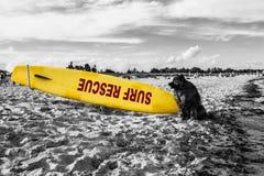 Ratownika pies Zdjęcie Royalty Free