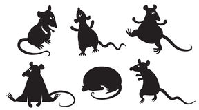 Rats Royalty Free Stock Photography