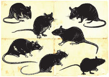 Rats collection, freehand sketching, vector illustration Stock Photos