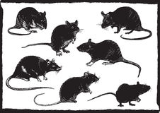 Rats collection, freehand sketching, vector illustration Royalty Free Stock Image