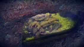 Rats de taupe nue Image stock