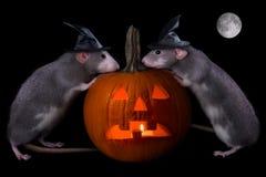 Rats de Veille de la toussaint Photo stock
