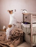Rats and dog Royalty Free Stock Photos
