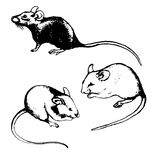 Rats, mice and graphic sketches (set) Stock Photography