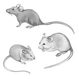 Rats, mice - pencil drawing by hand (set) Royalty Free Stock Photo