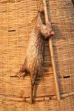 Rats morts sur le marché rural Images stock