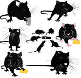 Rats of the mouse rodents animals cheese Stock Photos