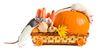 Rats with ripe vegetables Royalty Free Stock Photo