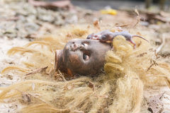Rats on scary dirty head blonde doll Stock Photography