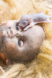 Rats on scary dirty head blonde doll Royalty Free Stock Photos