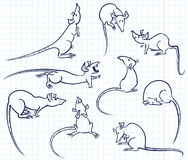 Rats set Royalty Free Stock Photos