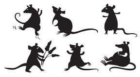 Rats Stock Images