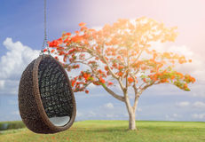 Rattan lounge hanging chair with white pillow Royalty Free Stock Photos