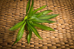 Rattan weave with plant. Background of rattan weave with plant Stock Images
