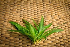 Rattan weave with plant. Background of rattan weave with plant Stock Image