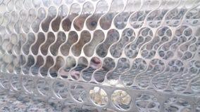 Ratte auf der Falle Stockfotos