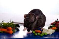 Ratte auf einem Vorstand mit Gemüse. stockbild