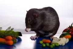 Ratte deRat stellt die Frische des Gemüses fest. Lizenzfreie Stockbilder