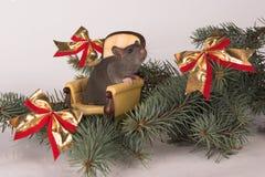 Ratte des neuen Jahres in einem Stuhl Stockbild