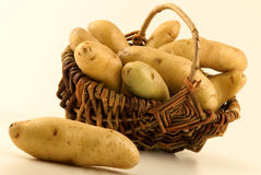 Ratte du Touquet potatoes Stock Images