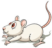 Ratte in einer springenden Position lizenzfreie abbildung