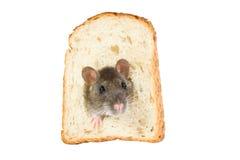 Ratte im Brotloch Stockbild