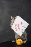 Ratte mit einer Liebesmeldung Stockbild