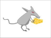 Ratte mit Käse Stockfotos