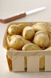 Ratte potatoes Stock Image