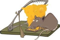 Rattekäse und ein Mousetrap Lizenzfreie Stockfotografie
