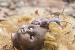 Ratten auf furchtsamer schmutziger blonder Hauptpuppe Stockfoto