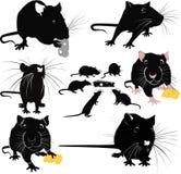 Ratten van de de dierenkaas van muisknaagdieren Stock Foto's