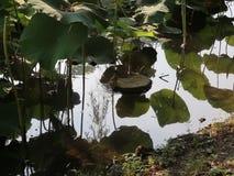 Rattenoever van het meer stock video