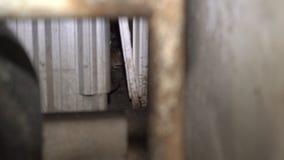 Ratti in contenitori di immondizia Una parte nascosta di grandi città video d archivio