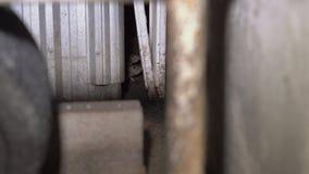 Ratti in contenitori di immondizia Una parte nascosta di grandi città archivi video
