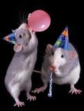 Ratti del partito Fotografie Stock