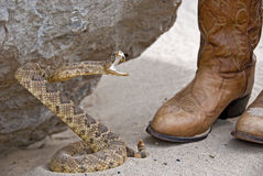 Rattle Snake Attacking Royalty Free Stock Photos