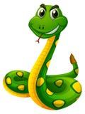 Rattle snake on white background Stock Images
