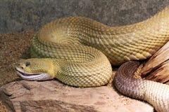 Rattlesnake Stock Image