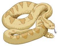 Free Rattlesnake Brown In White Background Royalty Free Stock Photos - 58861938