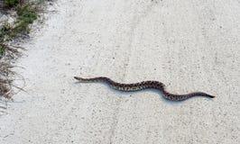 Rattlesnake crawls through country road Royalty Free Stock Photos